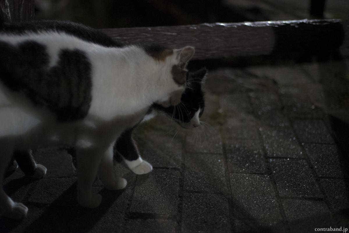 夜猫 anzu