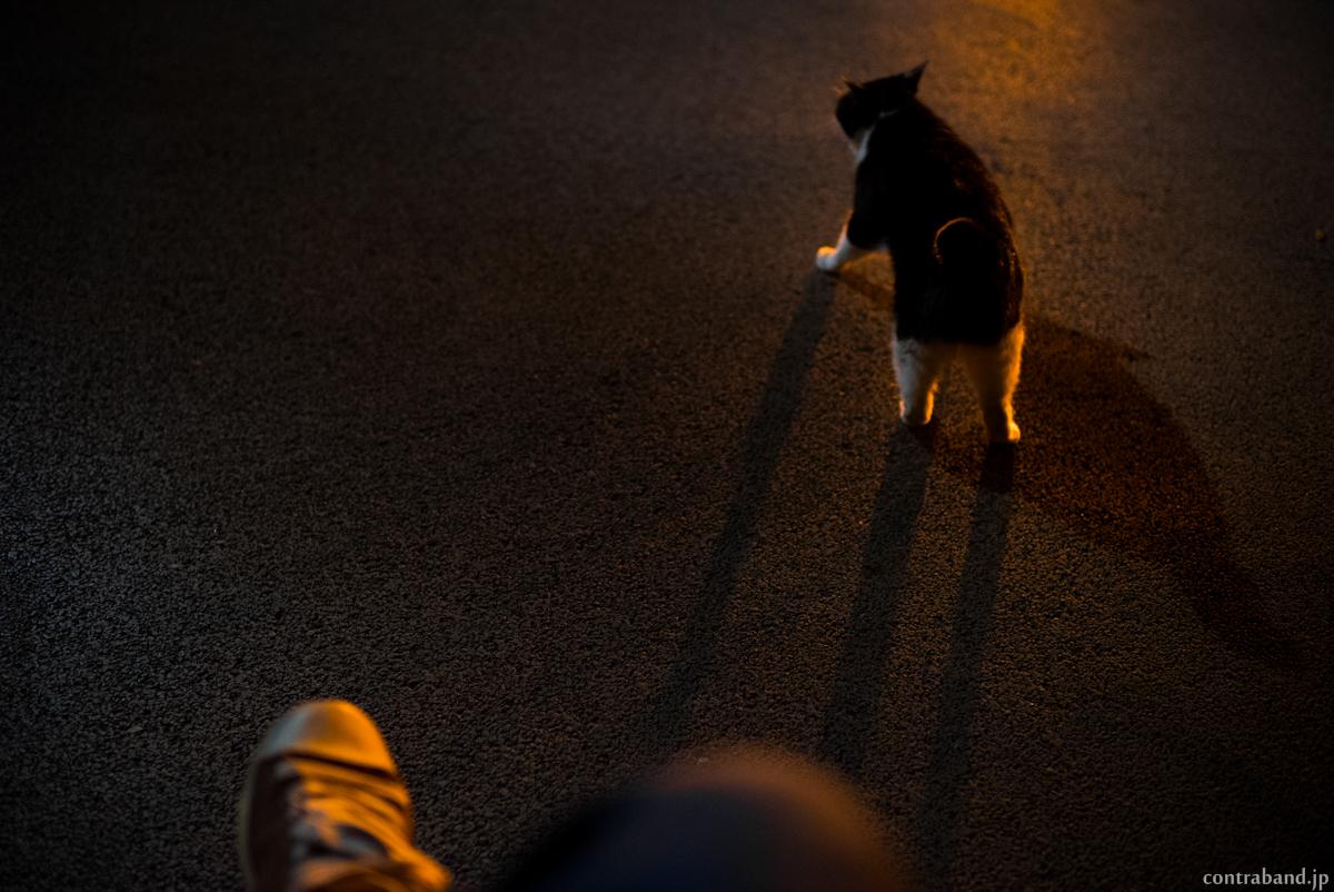 夜猫sanpo