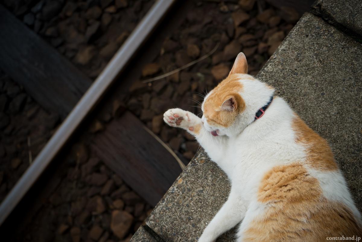 養老渓谷駅 猫